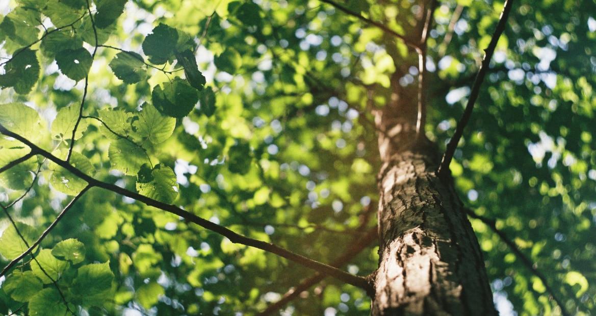IMPRIM'ECLAIR : L'engagement Écologique